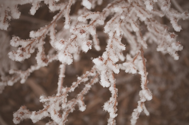 FROST0301140006_800
