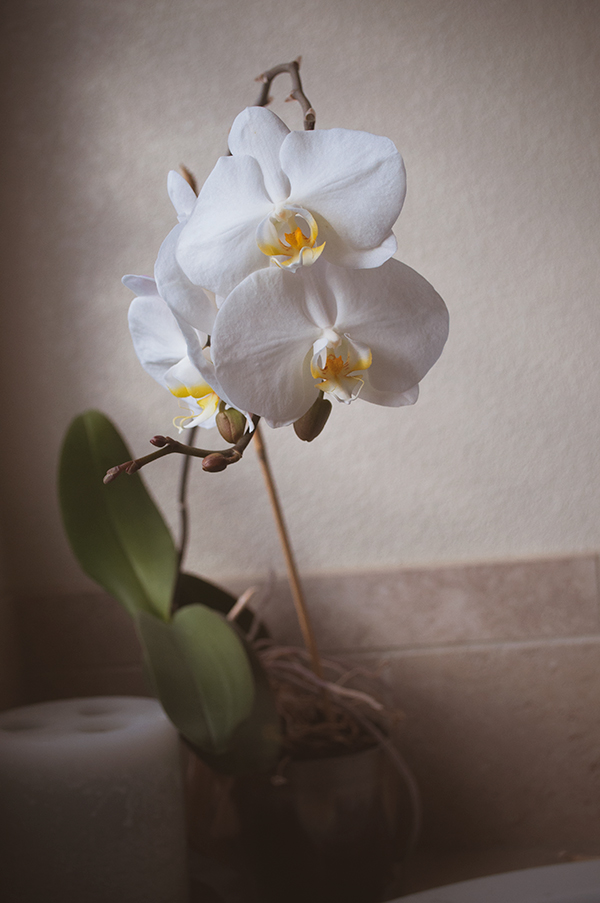 ORCHID20140024_600