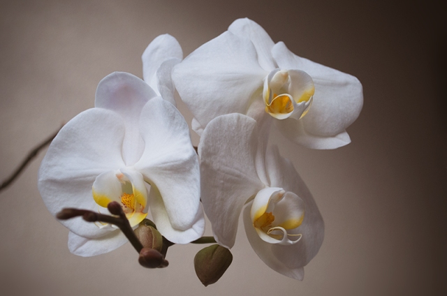 ORCHID20140025_800