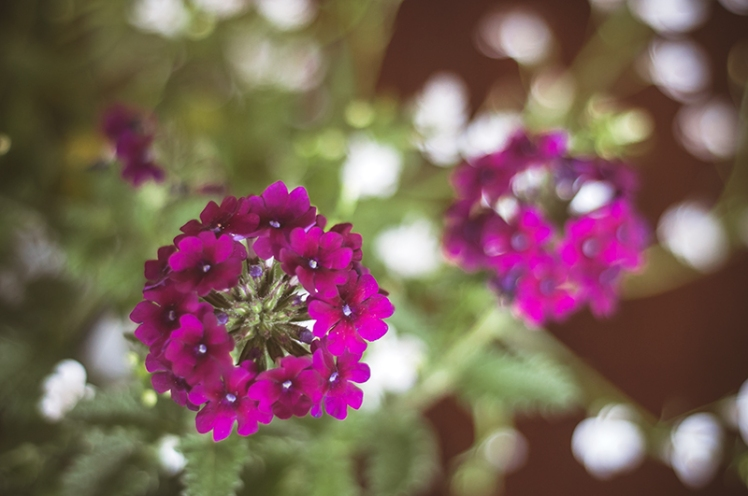 FLOWERS0006_800