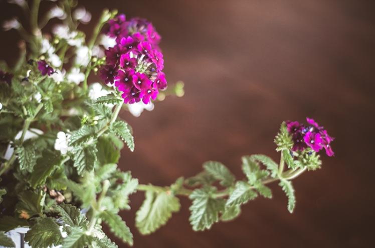FLOWERS0018_800