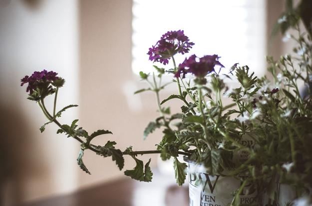 FLOWERS0025_800