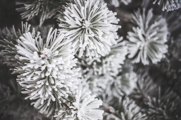 FROST010720150004_800