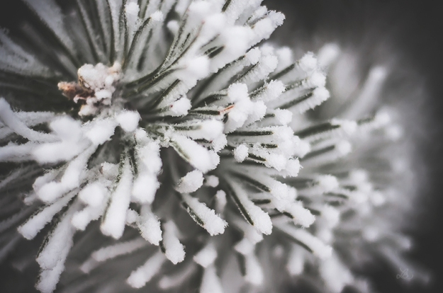 FROST010720150025_800