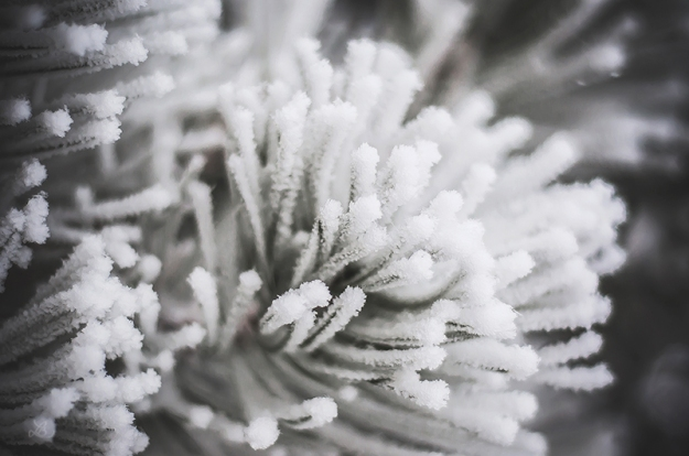FROST010720150026_800