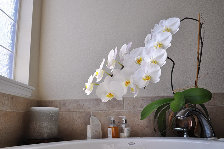 ORCHID02.26.2012_0051_800