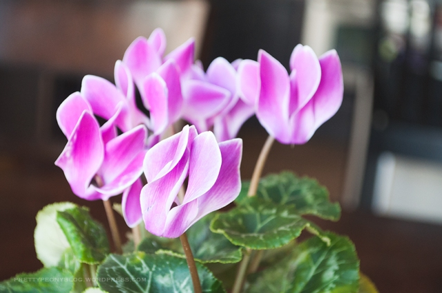 FLOWERS051120150031_840