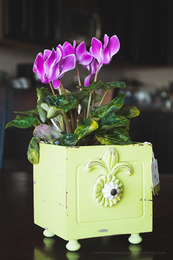 FLOWERS051120150032_600