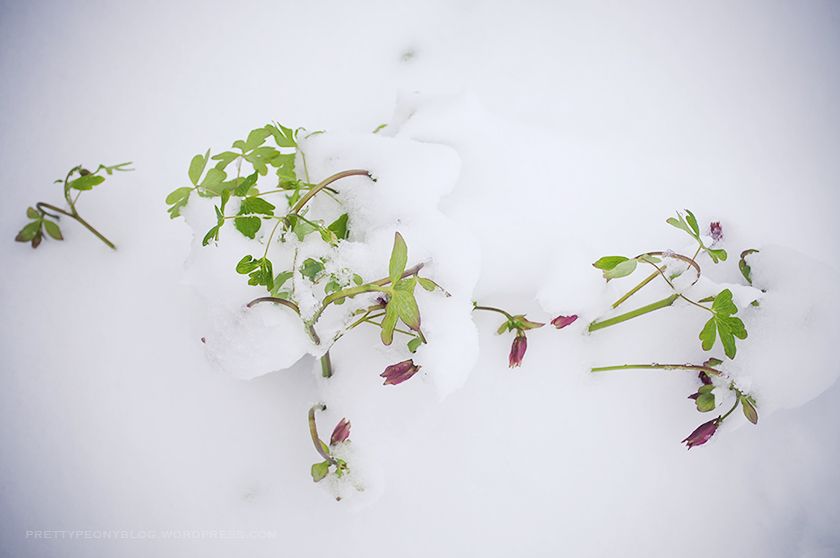 SNOW051020150015_840