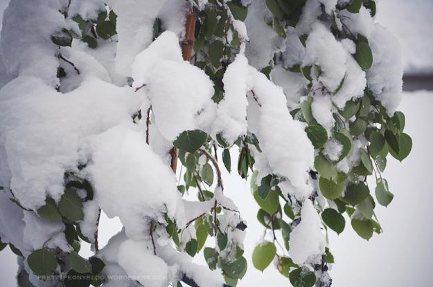 SNOW051020150019_840