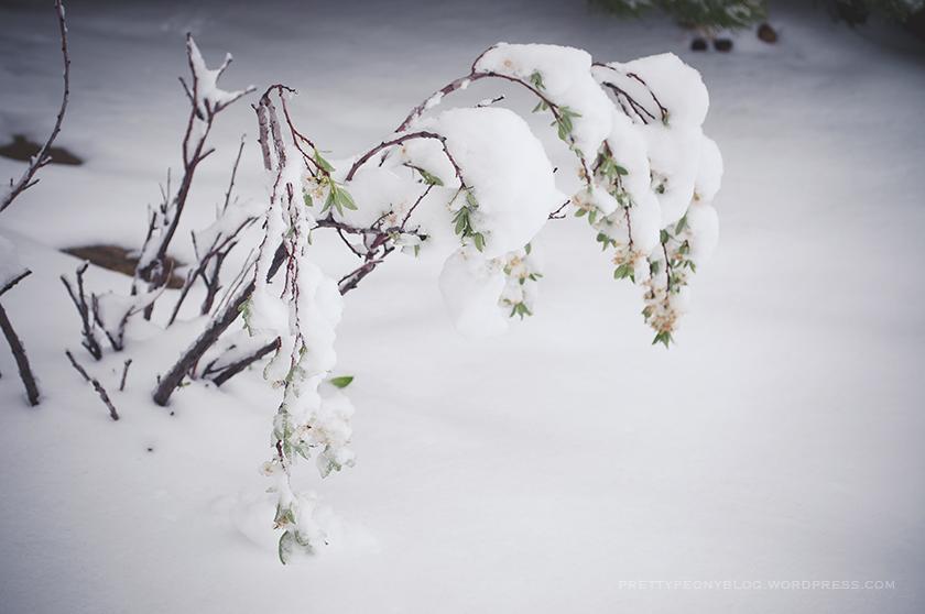SNOW051020150021_840